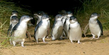 penguin-sighting